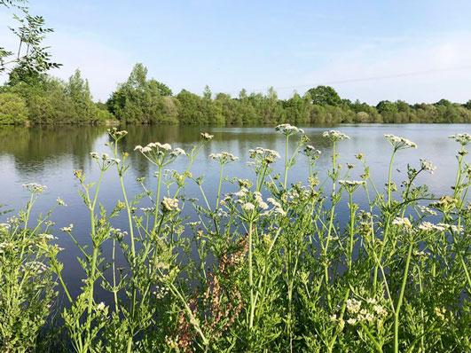 flore étang camping Vendée
